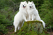 DOG 01 JE0158 01
