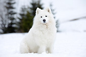 DOG 01 JE0159 01
