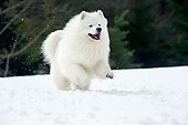DOG 01 JE0160 01