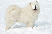 DOG 01 JE0164 01