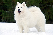 DOG 01 JE0165 01