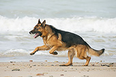 DOG 01 JE0174 01