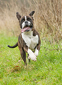 DOG 01 JE0182 01