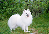 DOG 01 JN0003 01