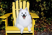 DOG 01 JN0004 01