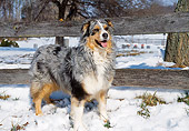 DOG 01 JN0005 01