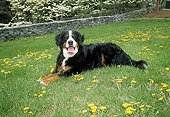 DOG 01 JN0009 01