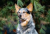 DOG 01 JN0015 01