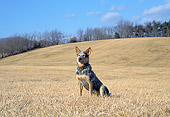 DOG 01 JN0017 01