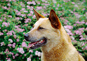 DOG 01 JN0018 01