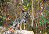 DOG 01 JN0019 01