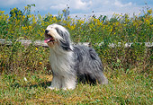 DOG 01 JN0022 01