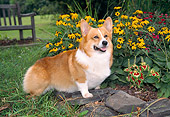 DOG 01 JN0024 01