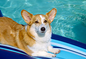 DOG 01 JN0025 01