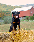DOG 01 JN0028 01
