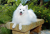 DOG 01 JN0033 01