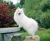 DOG 01 JN0034 01