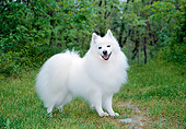 DOG 01 JN0036 01