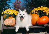 DOG 01 JN0037 01