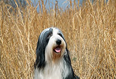 DOG 01 JN0038 01