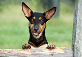 DOG 01 JN0039 01