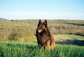 DOG 01 JN0041 01