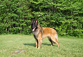 DOG 01 JN0042 01