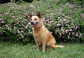DOG 01 JN0046 01