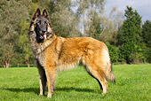 DOG 01 JS0005 01