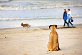 DOG 01 JS0006 01