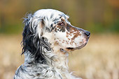 DOG 01 JS0008 01
