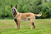 DOG 01 JS0019 01