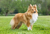 DOG 01 JS0026 01