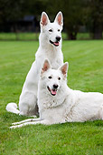 DOG 01 JS0029 01