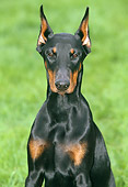 DOG 01 JS0036 01