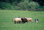 DOG 01 JS0043 01