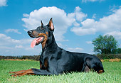 DOG 01 JS0045 01