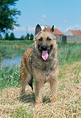 DOG 01 JS0046 01