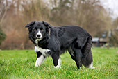 DOG 01 JS0053 01