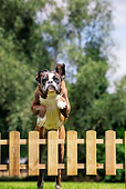 DOG 01 JS0058 01
