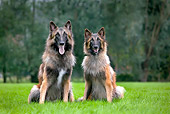 DOG 01 JS0060 01