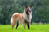 DOG 01 JS0061 01