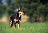 DOG 01 KH0094 01