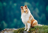 DOG 01 KH0097 01