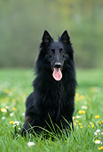 DOG 01 KH0103 01