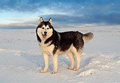DOG 01 KH0106 01