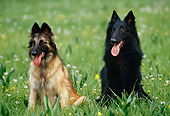 DOG 01 KH0109 01