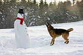 DOG 01 KH0113 01