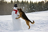 DOG 01 KH0114 01