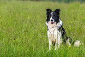 DOG 01 KH0116 01